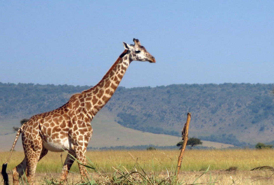 Interesting facts you need to know about the masai mara